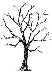 Naked Tree clipart #15, Download drawings