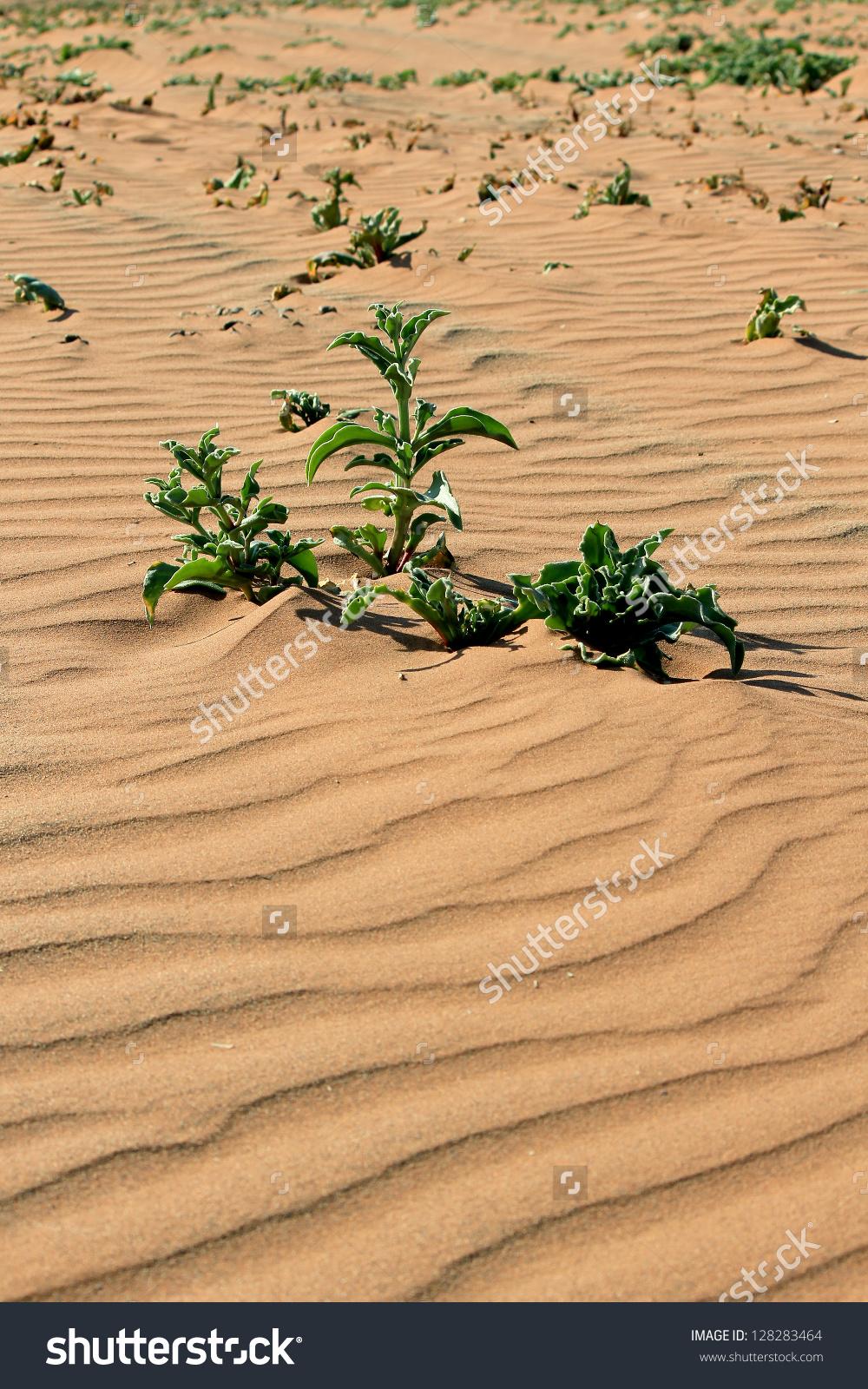Namib Desert clipart #5, Download drawings