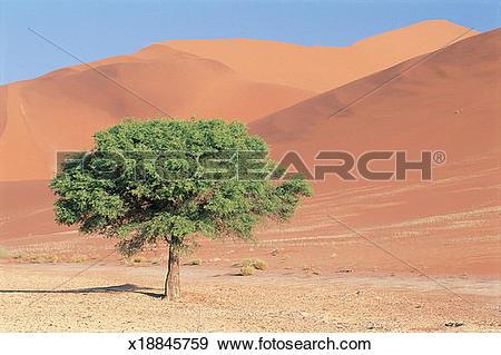 Namib Desert clipart #20, Download drawings