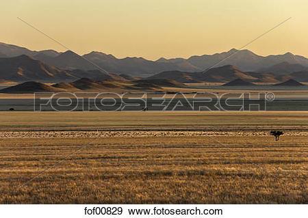 Namib Desert clipart #16, Download drawings