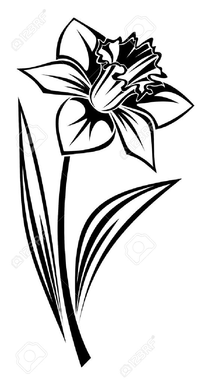 Narcisse clipart #9, Download drawings
