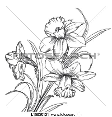 Narcisse clipart #6, Download drawings