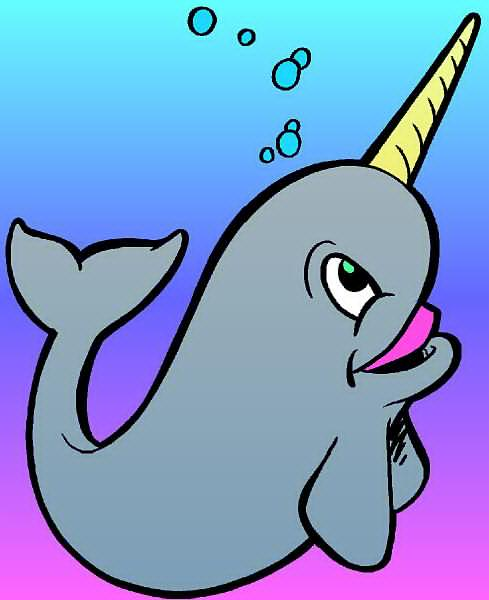 Narwhal clipart #11, Download drawings