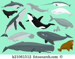 Narwhal clipart #5, Download drawings