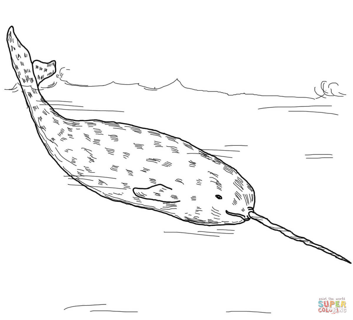 Narwhal coloring #15, Download drawings