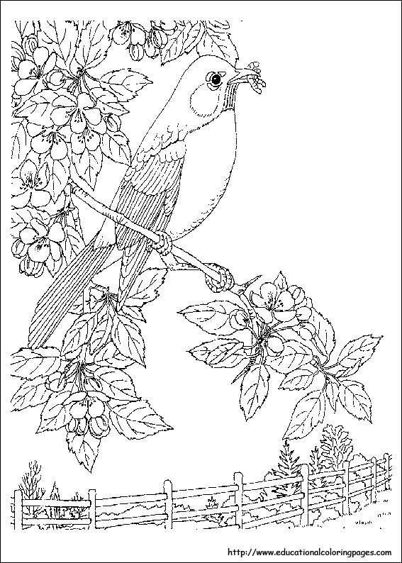 Natur coloring #6, Download drawings