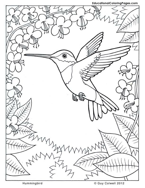Natur coloring #13, Download drawings