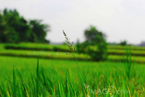 Paddy Field svg #14, Download drawings