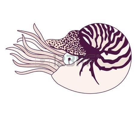 Nautilus clipart #5, Download drawings