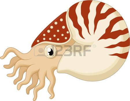 Nautilus clipart #8, Download drawings