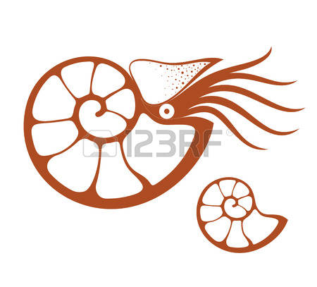 Nautilus clipart #2, Download drawings