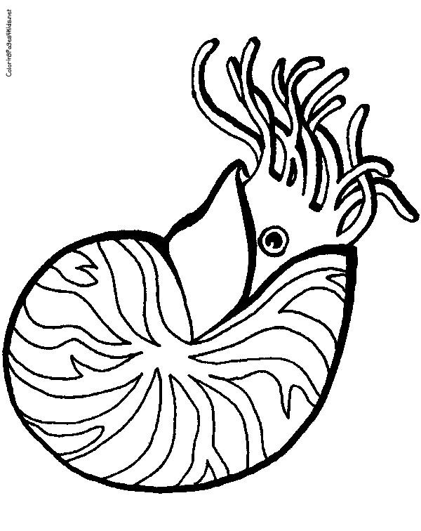 Nautilus coloring #15, Download drawings