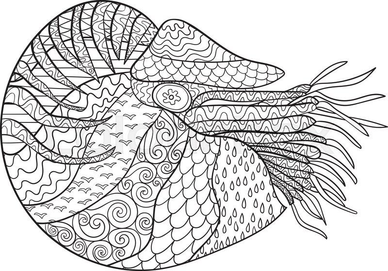 Nautilus coloring #3, Download drawings