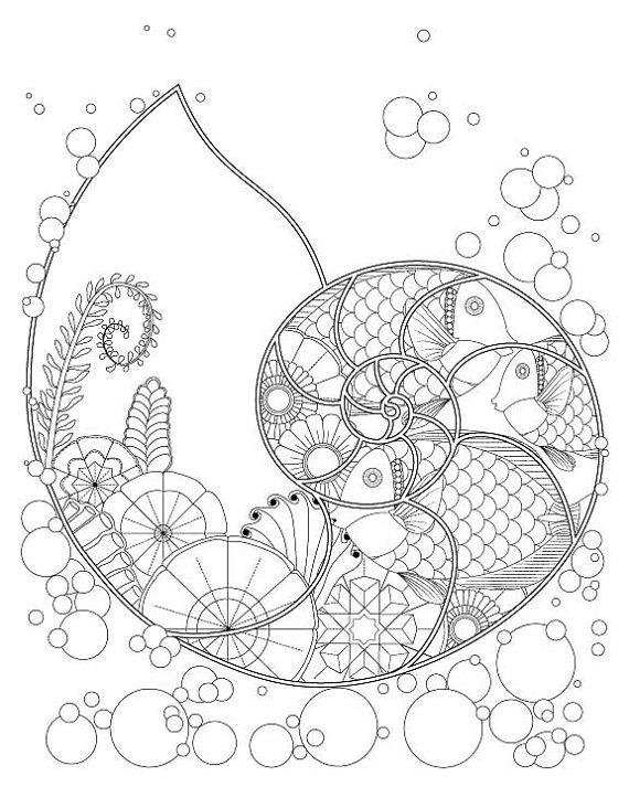 Nautilus coloring #8, Download drawings