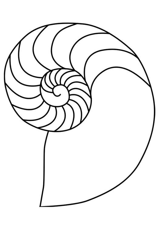 Nautilus coloring #19, Download drawings