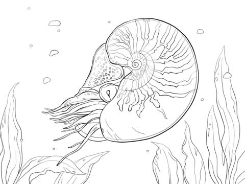 Nautilus coloring #10, Download drawings