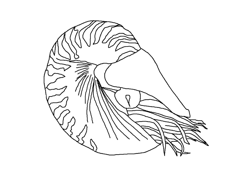 Nautilus coloring #2, Download drawings