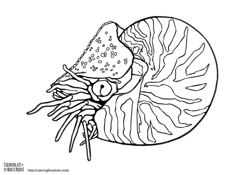 Nautilus coloring #6, Download drawings