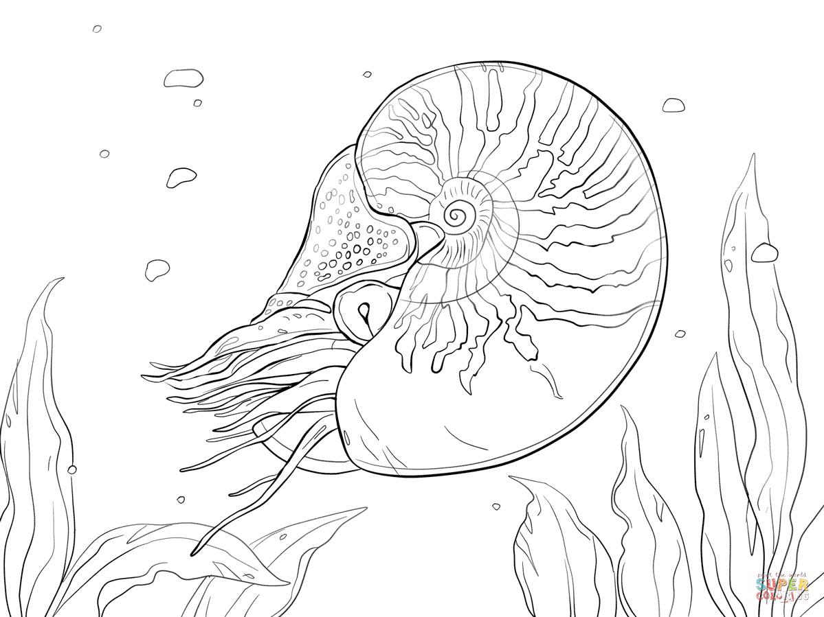 Nautilus coloring #18, Download drawings