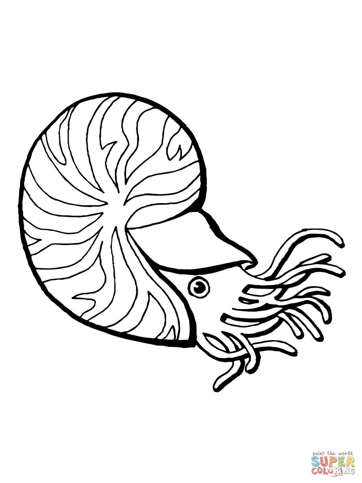 Nautilus coloring #14, Download drawings