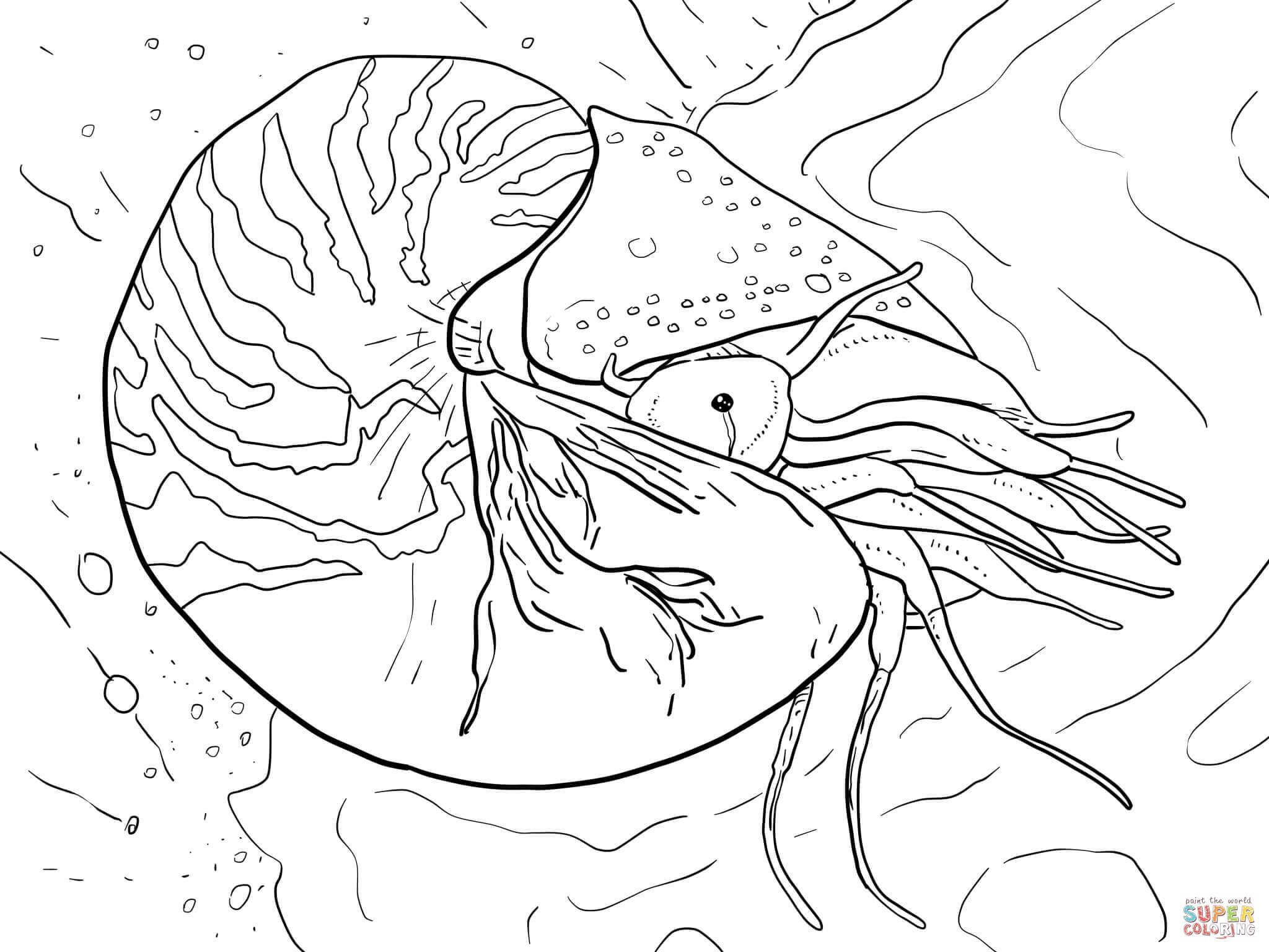 Nautilus coloring #7, Download drawings