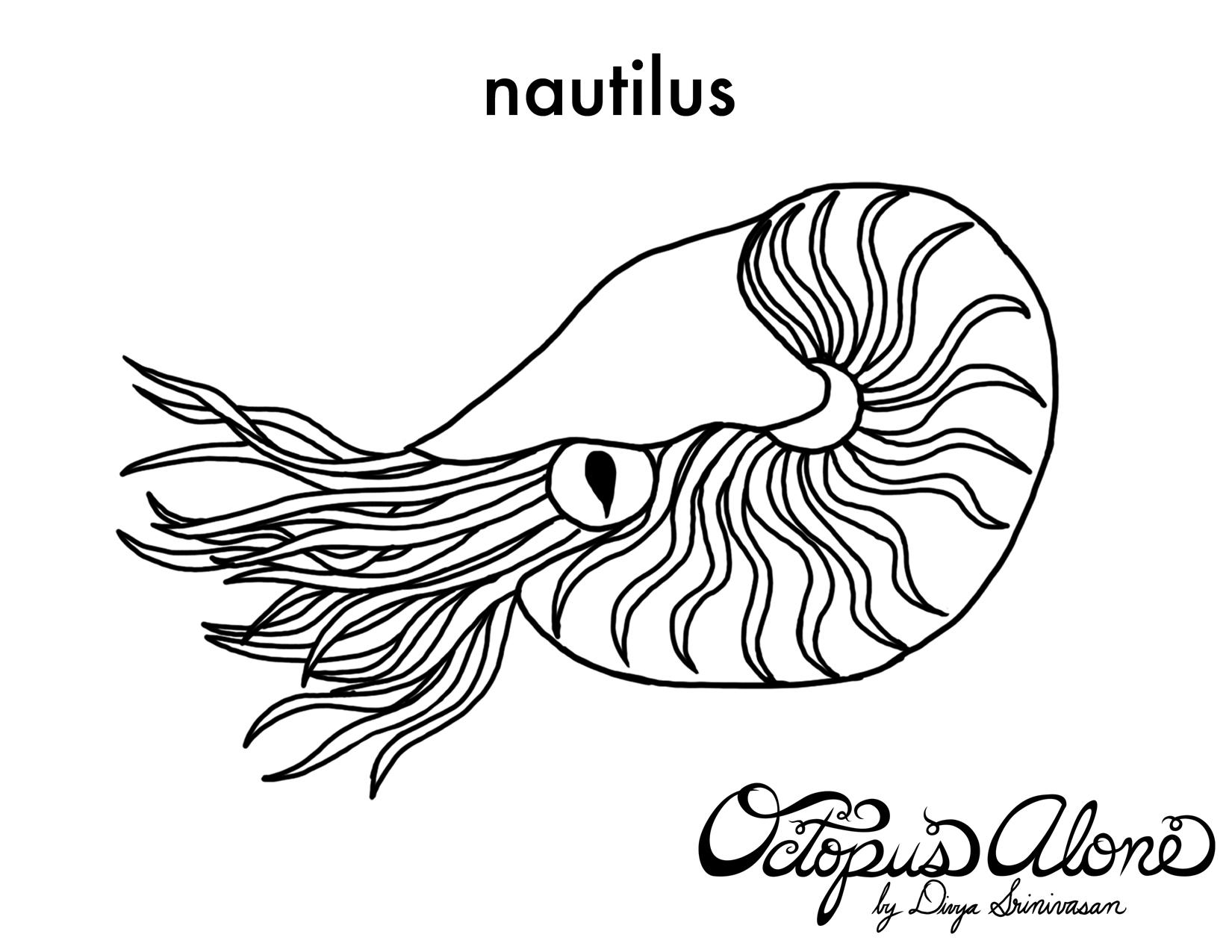 Nautilus coloring #11, Download drawings