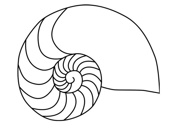 Nautilus coloring #1, Download drawings