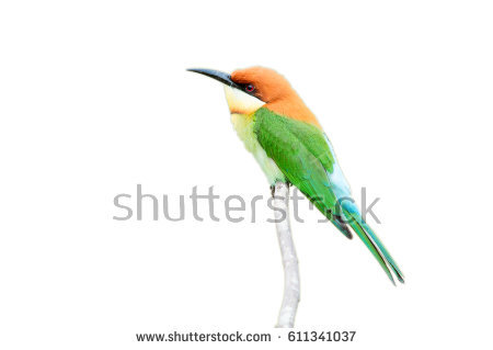 Near Passerine clipart #16, Download drawings