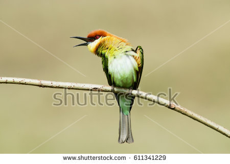 Near Passerine clipart #14, Download drawings
