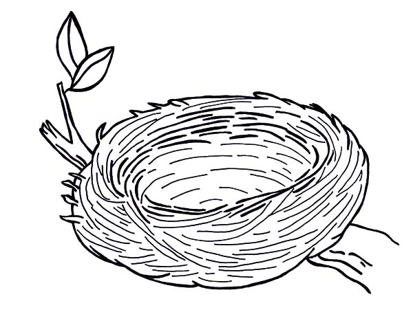 Nest coloring #4, Download drawings