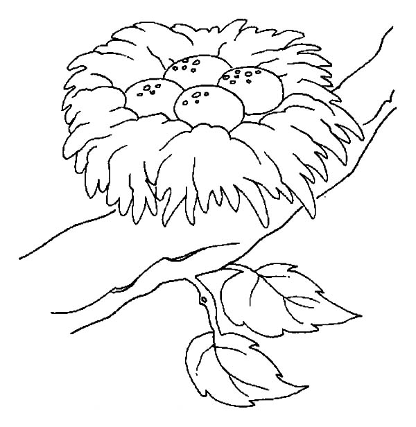 Nest White coloring #4, Download drawings