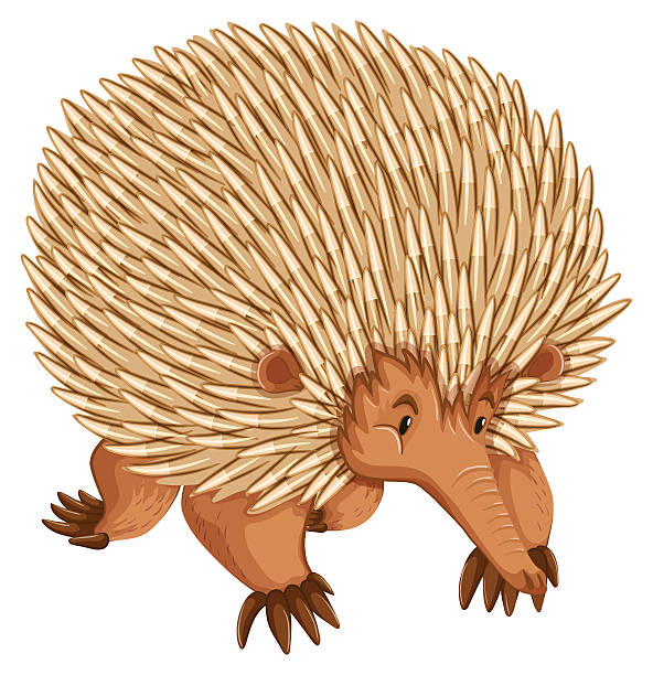 New World Porcupine clipart #15, Download drawings