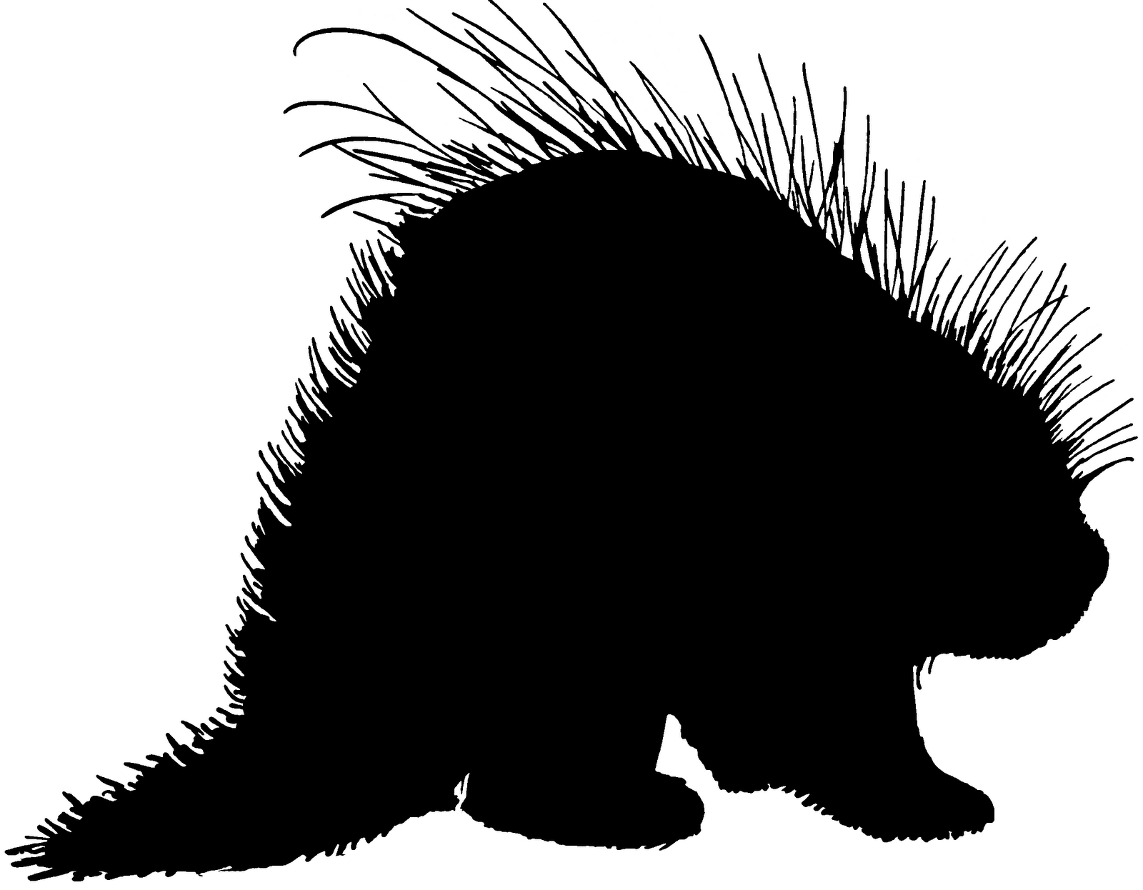 New World Porcupine clipart #2, Download drawings
