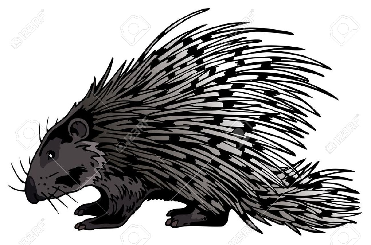 New World Porcupine clipart #17, Download drawings