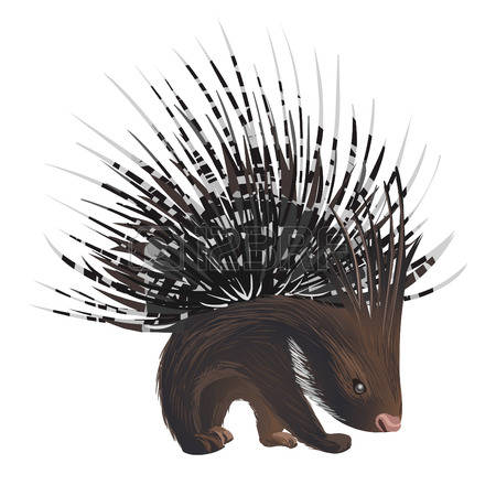 New World Porcupine clipart #14, Download drawings