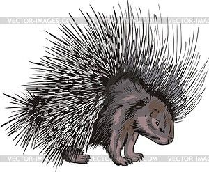 New World Porcupine clipart #9, Download drawings