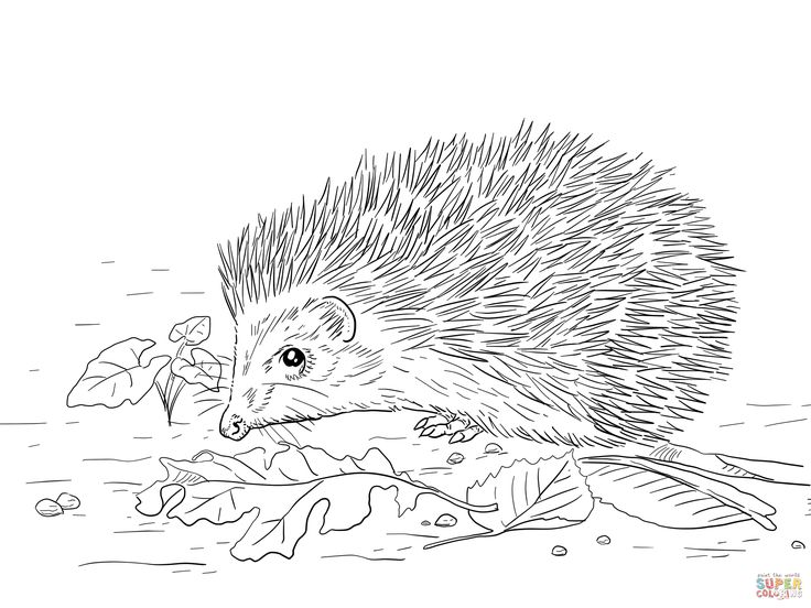 New World Porcupine coloring #11, Download drawings