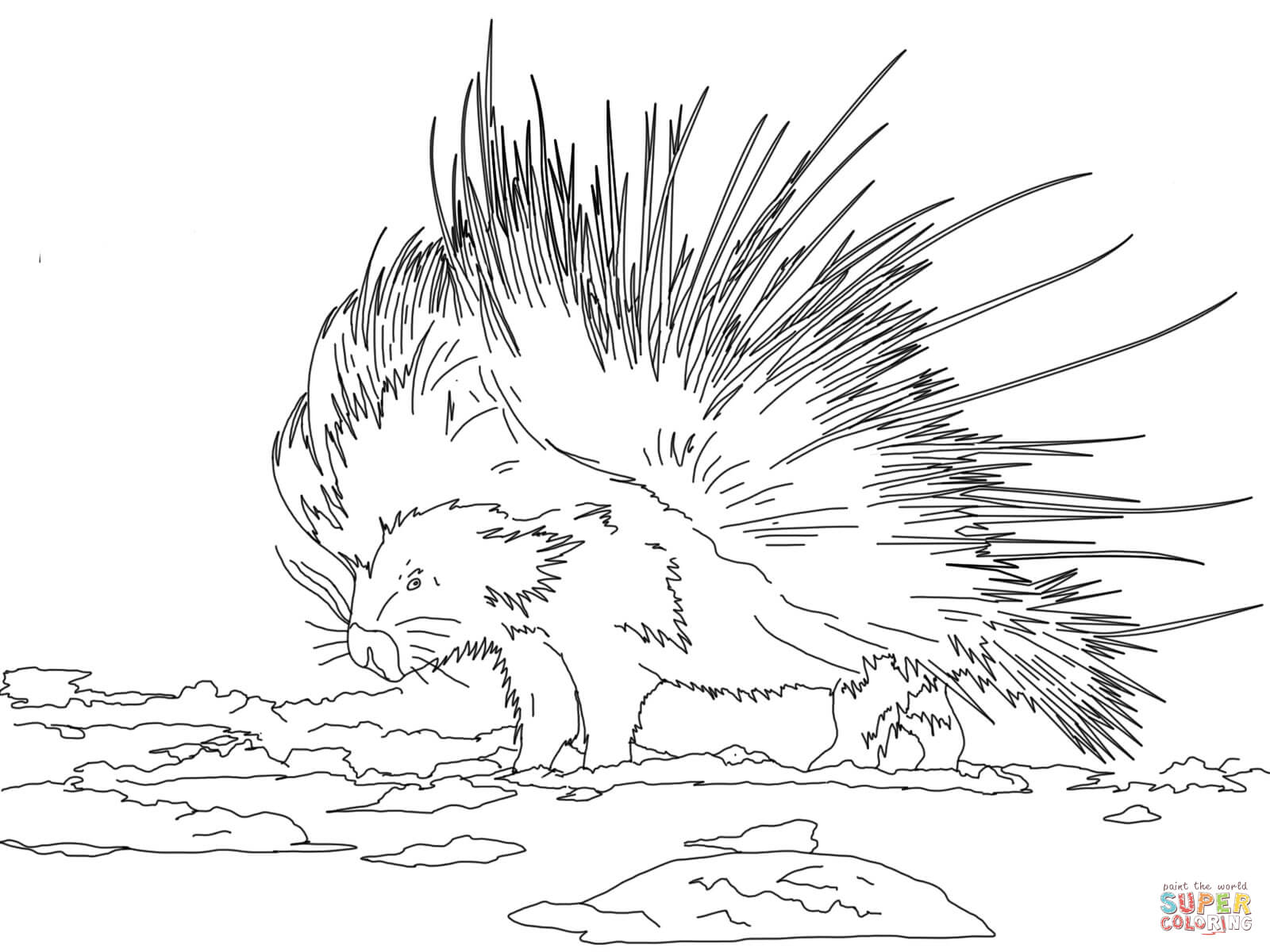 New World Porcupine coloring #3, Download drawings