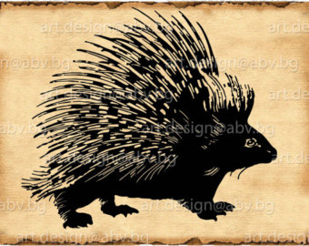 New World Porcupine svg #19, Download drawings