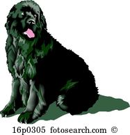 Newfoundland clipart #3, Download drawings