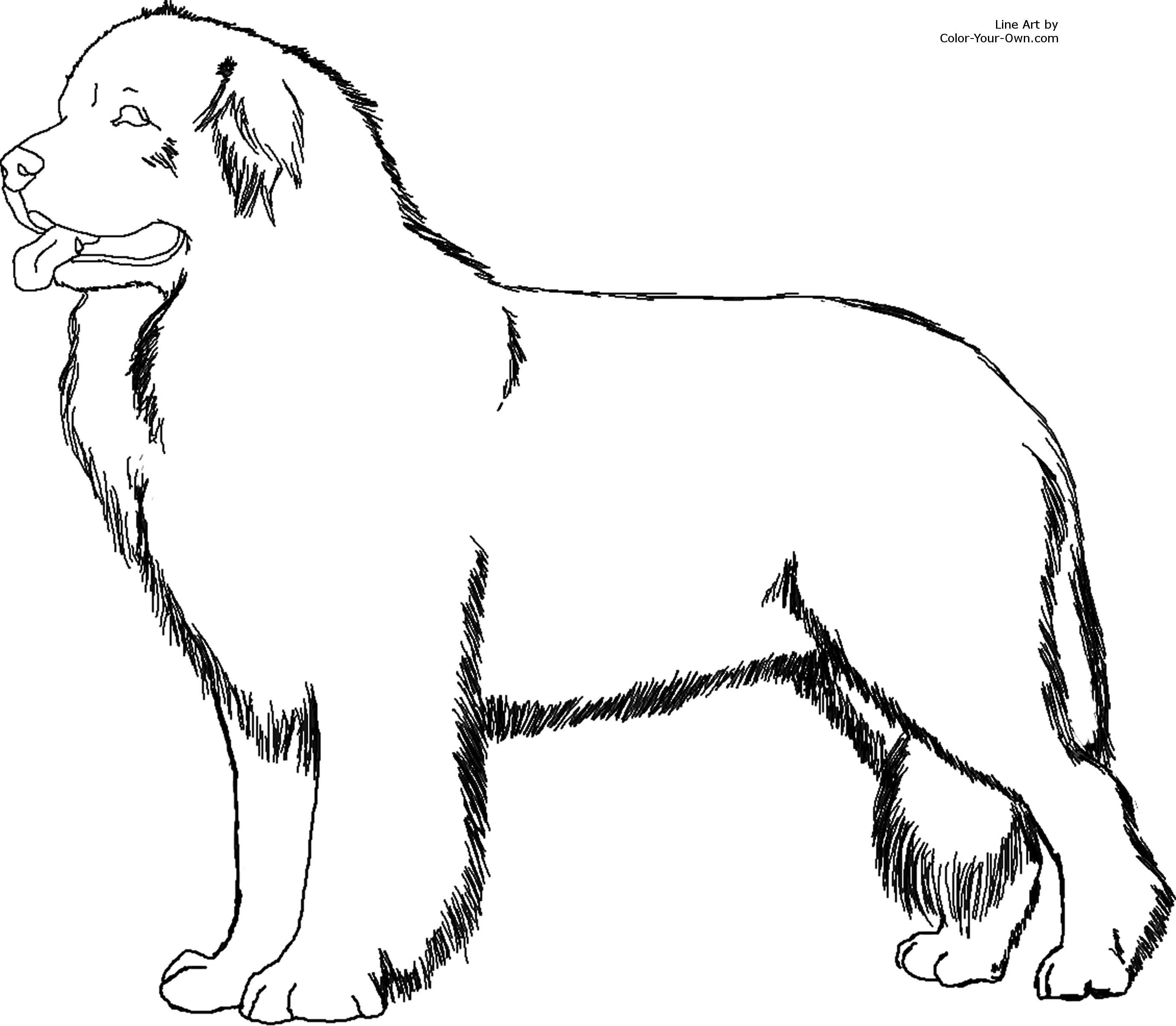 Newfoundland coloring #10, Download drawings
