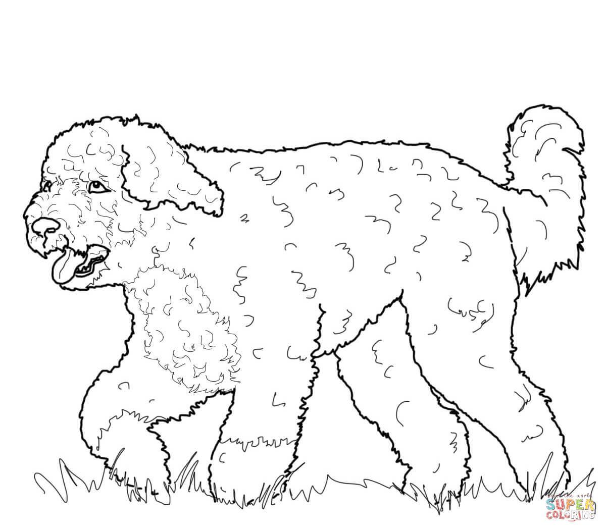 Newfoundland coloring #2, Download drawings