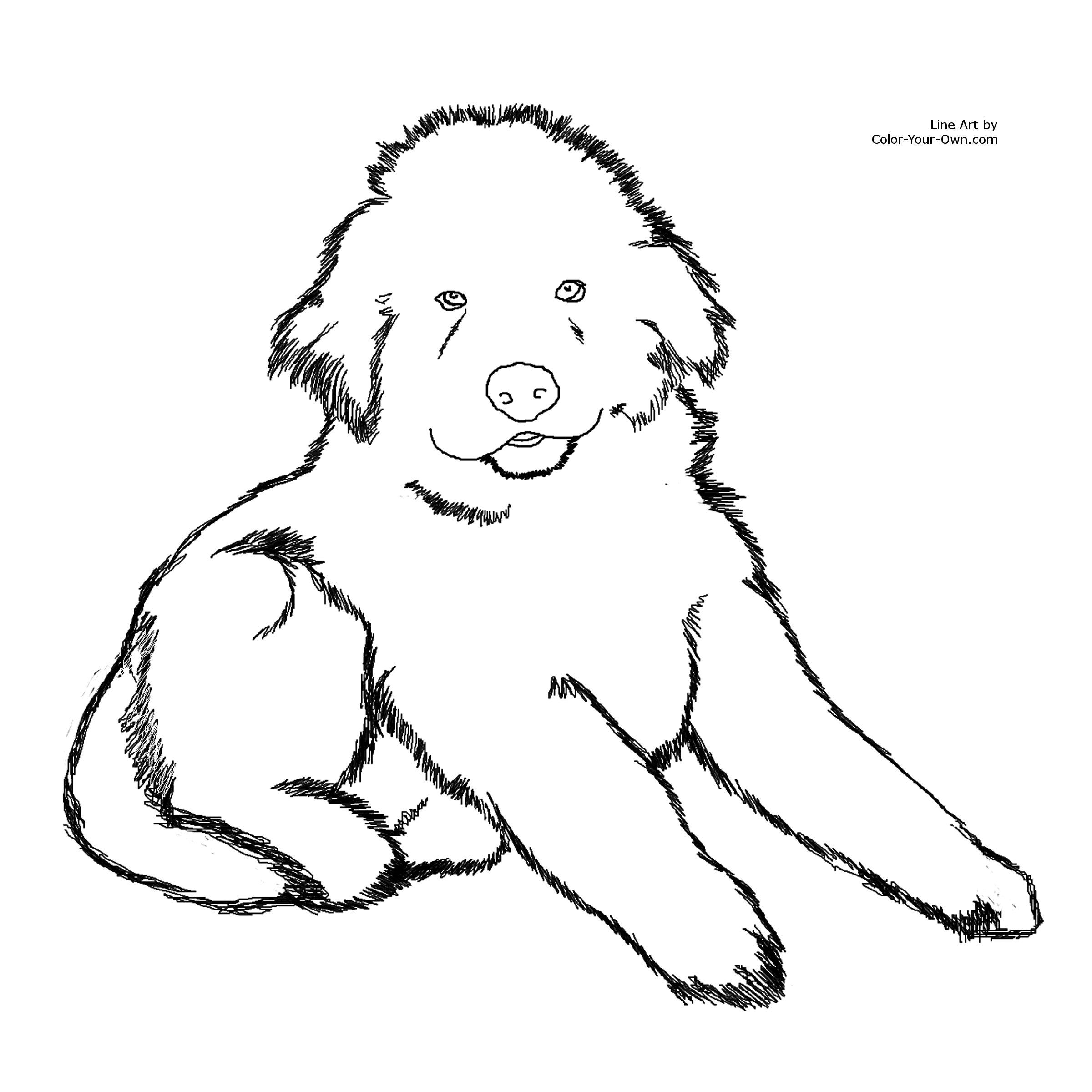 Newfoundland coloring #17, Download drawings