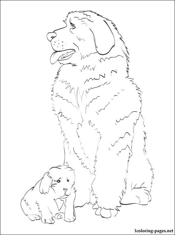 Newfoundland coloring #7, Download drawings