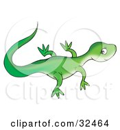 Newt clipart #8, Download drawings