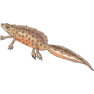 Newt clipart #11, Download drawings