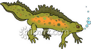 Newt clipart #15, Download drawings