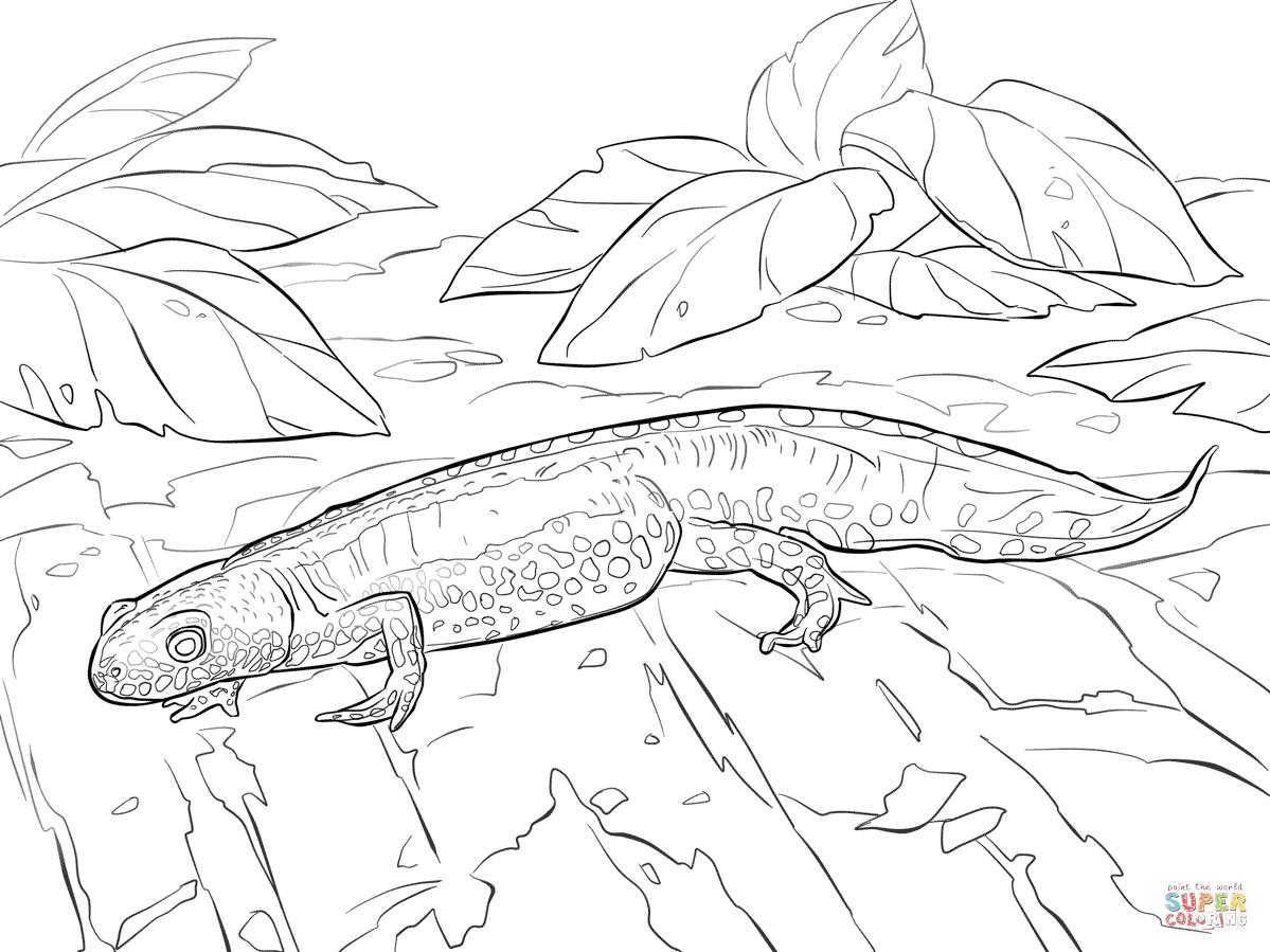 Newt coloring #3, Download drawings