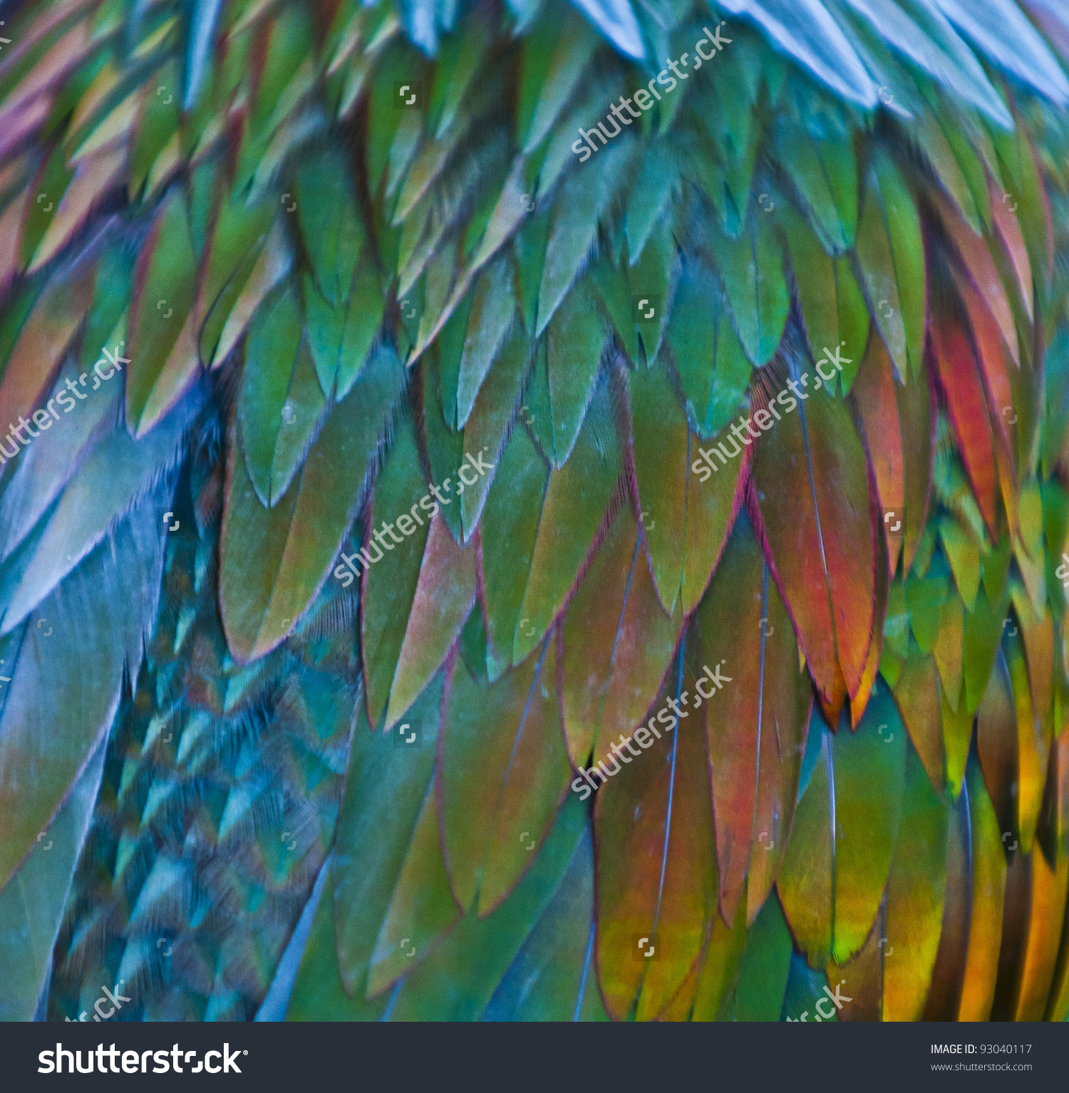 Nicobar Pigeon clipart #18, Download drawings