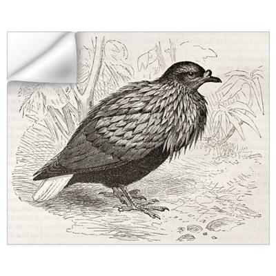 Nicobar Pigeon coloring #3, Download drawings